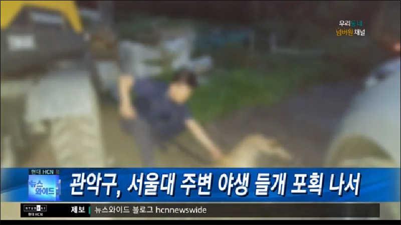관악구, 서울대 주변 야생 들개 포획 나서